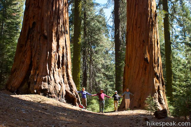 Giant sequoias Hart Tree Trail