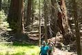 Hart Tree Trail Redwood Mountain Grove Kings Canyon National Park