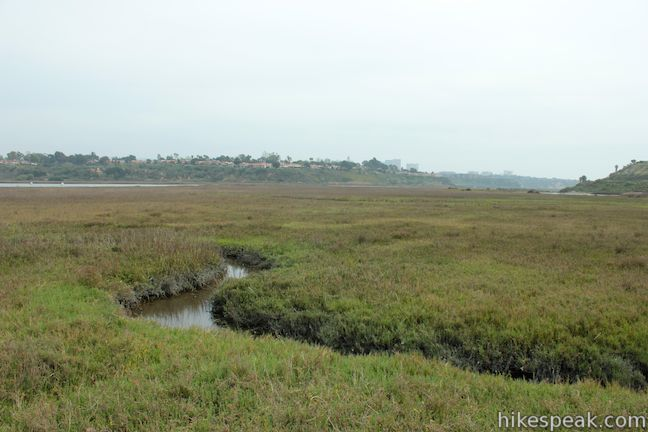 Upper Newport Bay estuary stream