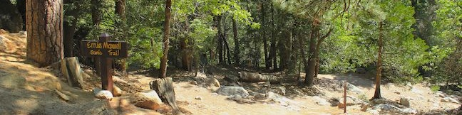 Ernie Maxwell Scenic Trail Idyllwild Fern Valley San Bernardino National Forest Humber Park hike San Jacinto Mountains