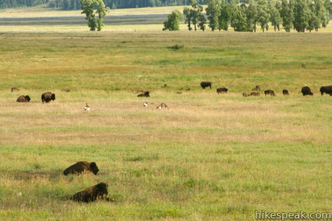Lamar Valley | Yellowstone National Park | Hikespeak.com