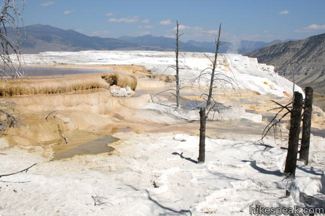 Canary Spring Yellowstone