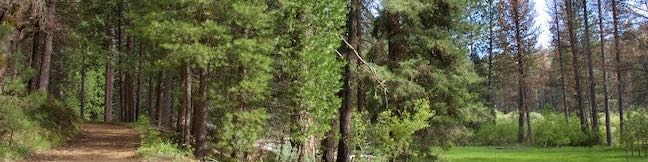 Wawona Meadow Loop Trail Yosemite NP Hikespeakcom