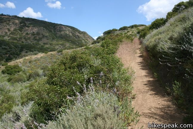 Corral Canyon Trail Malibu