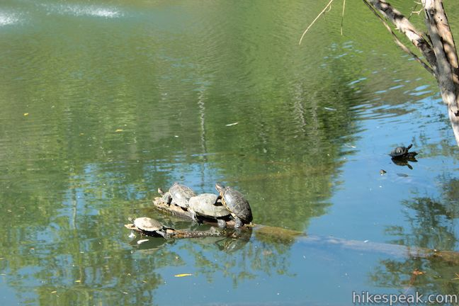 Franklin Canyon Park Turtles Heavenly Pond