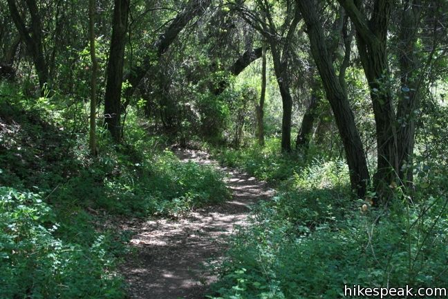 Santa Ynez Waterfall Trail