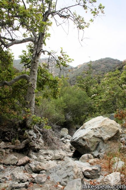 Zuma Canyon Trail in the Santa Monica Mountains